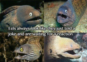 Poor eels.  I'm laughing guys.  I get it, I really do.