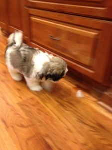 Sophie Ru chasing after an ice mouse.