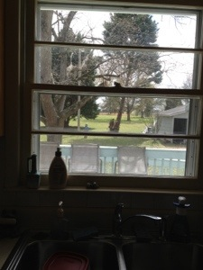 The sink and view out the kitchen window--where I refresh my soul.  At Blackberry Flats.