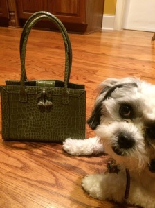 Miss Sophie photobombing the picture of my cute little bag.  I didn't retake it, so you can see just how little it is.