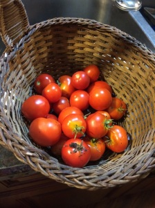 The cherry tomatoes our Princess harvested today.