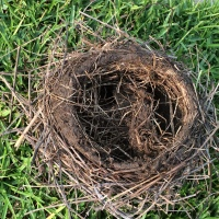 Bad Storms and Birds' Nests