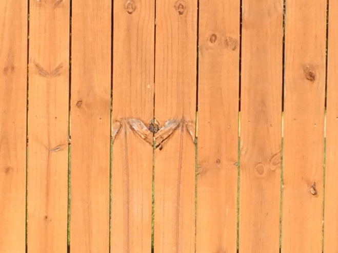 A heart with wings on the fence that Miss Sophie and I walked by this morning.