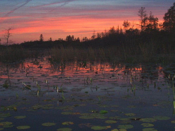 By U.S. Fish and Wildlife Service Headquarters (Okefenokee Sunset  Uploaded by Dolovis) [CC BY 2.0 (http://creativecommons.org/licenses/by/2.0)], via Wikimedia Commons