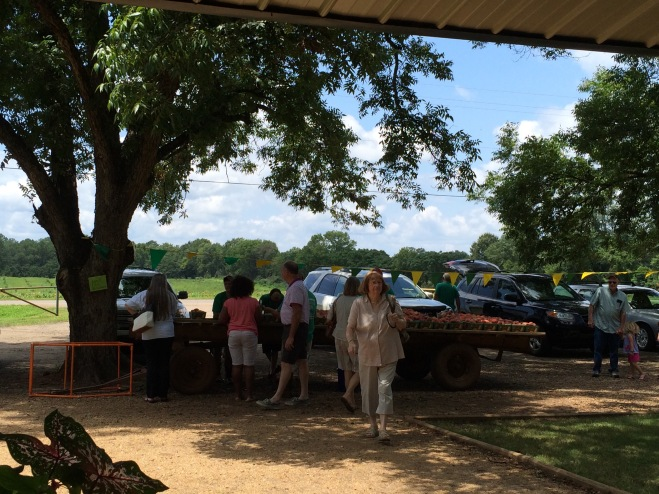 Folks choosing their O'Henry peaches from the wagon.  There were so few this time of year they were being sold in peck baskets instead of half bushel boxes.