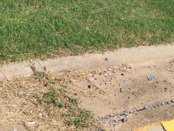 The tiny ants were crawling all over the pavement and back into their nest in the grass.