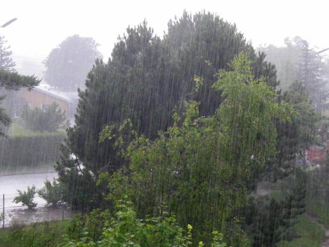 """22 Regen ubt"" by Tomasz Sienicki. Licensed under CC BY 3.0 via Wikimedia Commons - https://commons.wikimedia.org/wiki/File:22_Regen_ubt.jpeg#/media/File:22_Regen_ubt.jpeg"