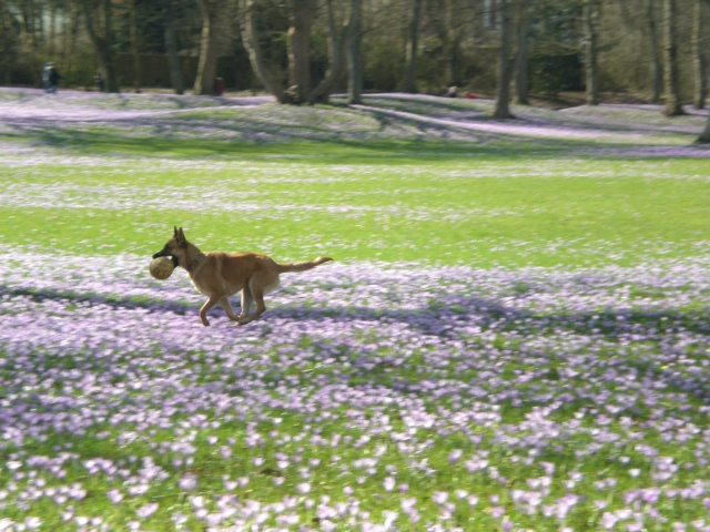 Husum-Schlosspark-Playing-Dog