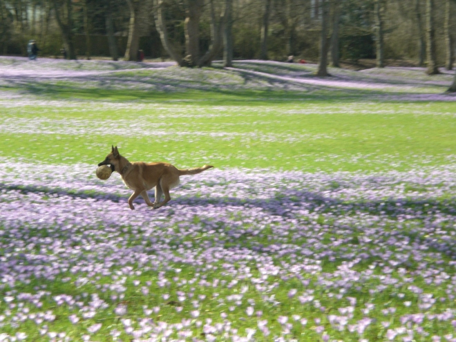 Husum-Schlosspark-Playing-Dog