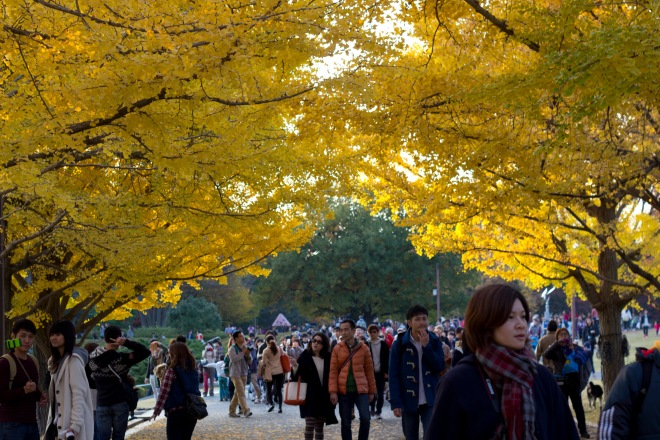 Showa_Kinen_Koen_golden_gingko