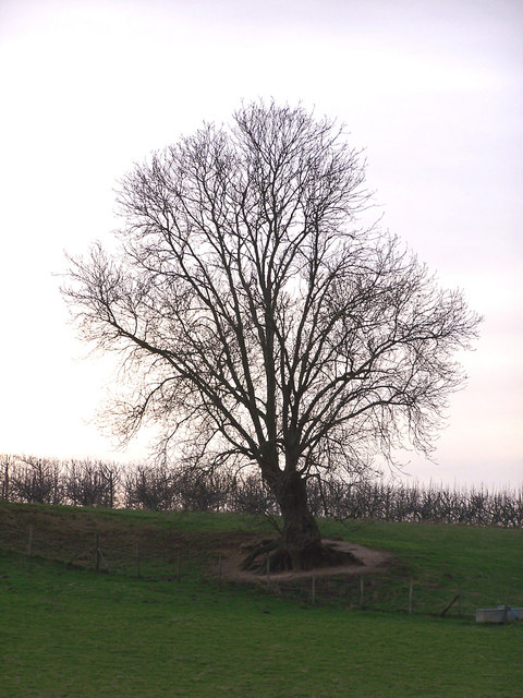 Tree_with_exposed_roots_-_geograph.org.uk_-_668825
