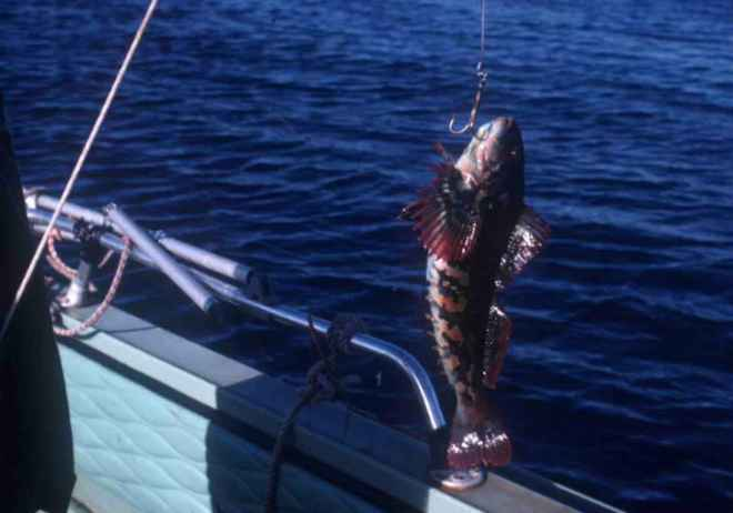 Fish_on_hook